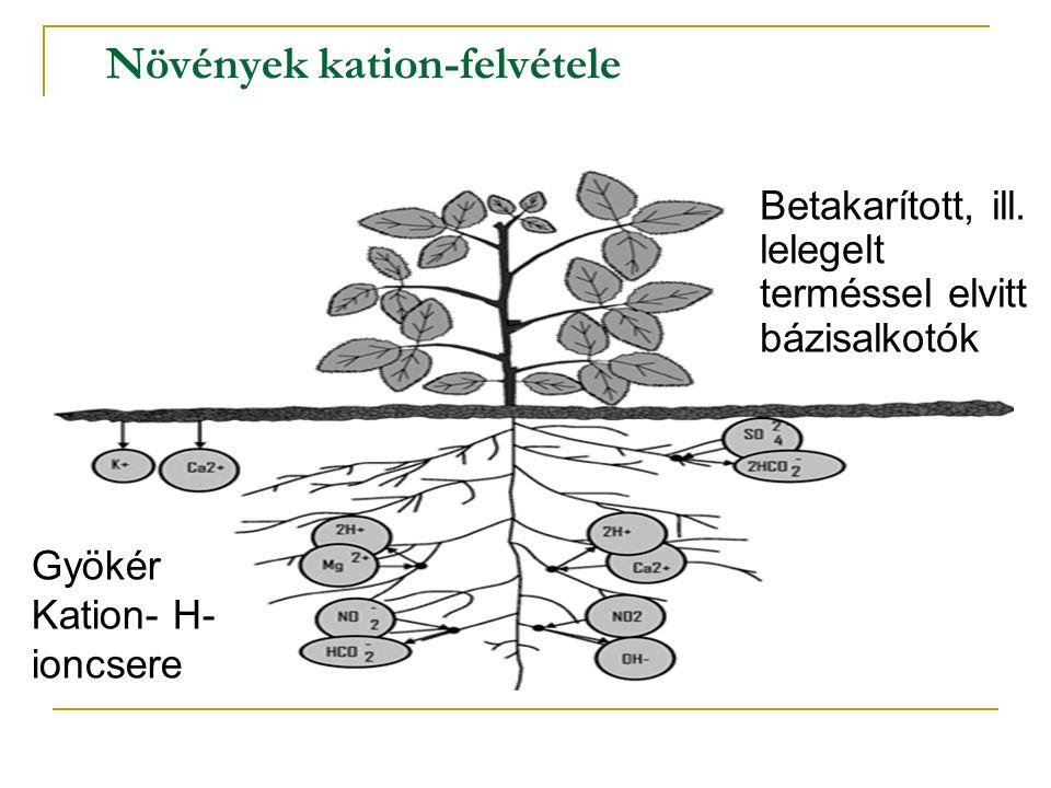 Növények kation-felvétele Betakarított, ill. lelegelt terméssel elvitt bázisalkotók Gyökér Kation- H- ioncsere