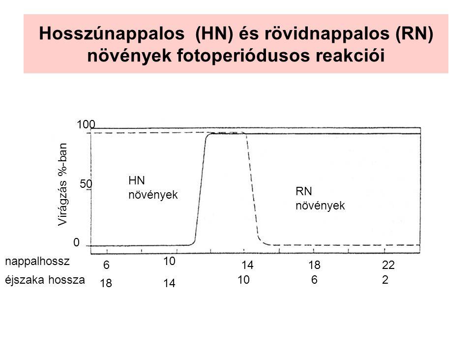 Hosszúnappalos (HN) és rövidnappalos (RN) növények fotoperiódusos reakciói Virágzás %-ban 0 50 100 HN növények RN növények nappalhossz éjszaka hossza