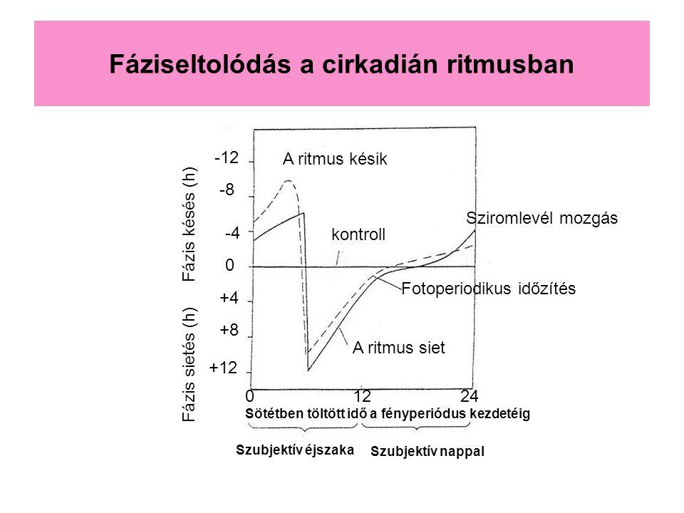 Fáziseltolódás a cirkadián ritmusban 0 -4 -8 -12 +4 +8 +12 kontroll A ritmus siet A ritmus késik Fotoperiodikus időzítés Sziromlevél mozgás Szubjektív