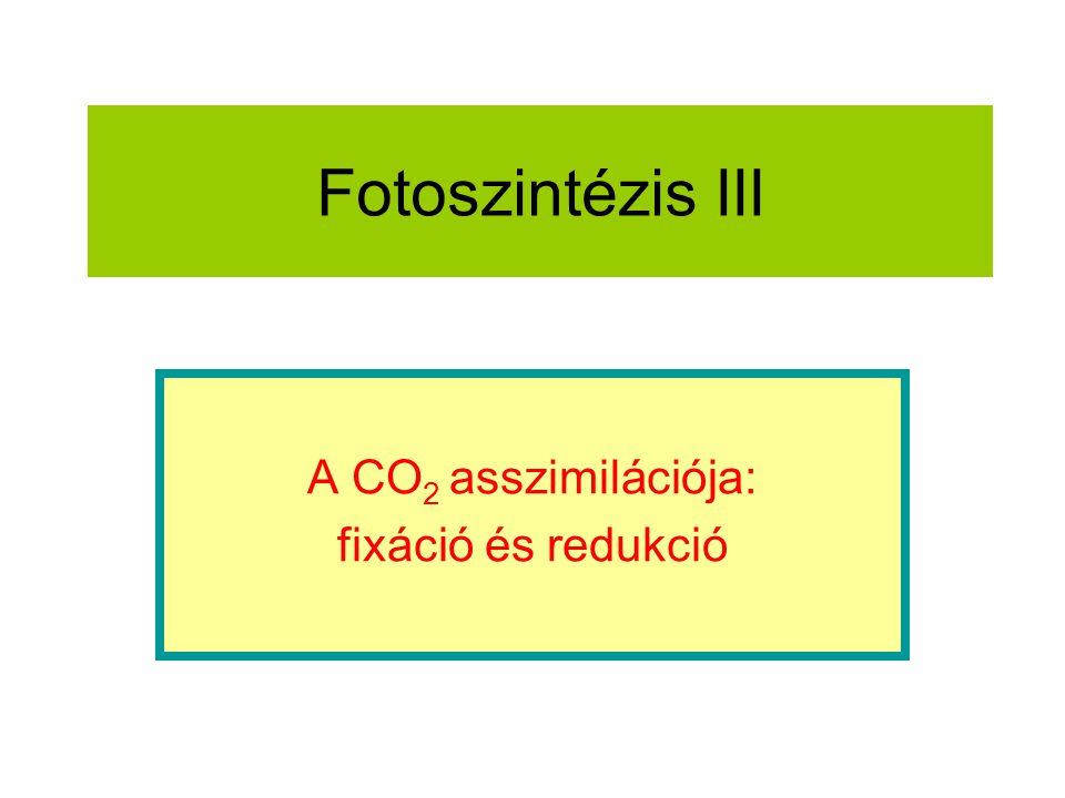 A Calvin ciklus jelentősége Három pentózfoszfátból 3 molekula széndioxid megkötésével 6 triózfoszfát keletkezik A három pentózfoszfát regenerálódik A 3 széndioxid molekulából a nettó eredmény 1 exportálódó triózfoszfát Ez cukrok (szacharóz), zsírsavak, aminosavak szintézisére szolgál A folyamat során 9 ATP és 6 NADPH használódik fel