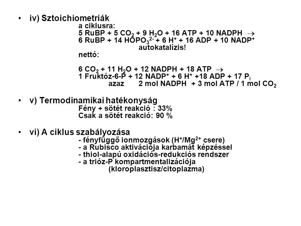 iv) Sztoichiometriák a ciklusra: 5 RuBP + 5 CO 2 + 9 H 2 O + 16 ATP + 10 NADPH  6 RuBP + 14 HOPO 3 2- + 6 H + + 16 ADP + 10 NADP + autokatalízis.
