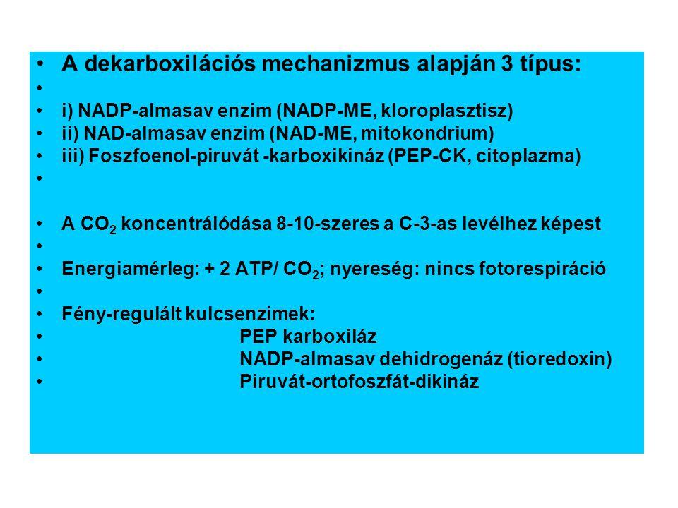 A dekarboxilációs mechanizmus alapján 3 típus: i) NADP-almasav enzim (NADP-ME, kloroplasztisz) ii) NAD-almasav enzim (NAD-ME, mitokondrium) iii) Foszfoenol-piruvát -karboxikináz (PEP-CK, citoplazma) A CO 2 koncentrálódása 8-10-szeres a C-3-as levélhez képest Energiamérleg: + 2 ATP/ CO 2 ; nyereség: nincs fotorespiráció Fény-regulált kulcsenzimek: PEP karboxiláz NADP-almasav dehidrogenáz (tioredoxin) Piruvát-ortofoszfát-dikináz