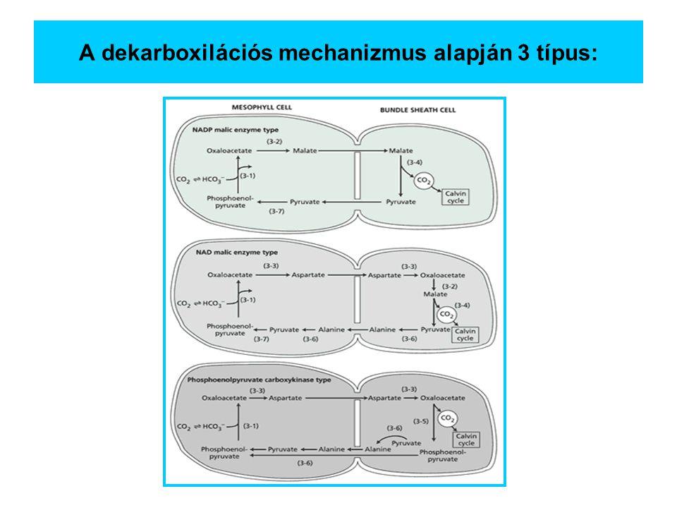A dekarboxilációs mechanizmus alapján 3 típus: