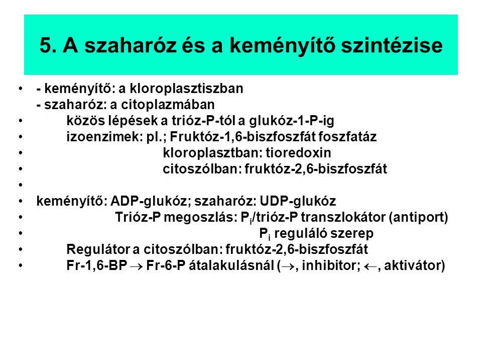 - keményítő: a kloroplasztiszban - szaharóz: a citoplazmában közös lépések a trióz-P-tól a glukóz-1-P-ig izoenzimek: pl.; Fruktóz-1,6-biszfoszfát foszfatáz kloroplasztban: tioredoxin citoszólban: fruktóz-2,6-biszfoszfát keményítő: ADP-glukóz; szaharóz: UDP-glukóz Trióz-P megoszlás: P i /trióz-P transzlokátor (antiport) P i reguláló szerep Regulátor a citoszólban: fruktóz-2,6-biszfoszfát Fr-1,6-BP  Fr-6-P átalakulásnál ( , inhibitor; , aktivátor)
