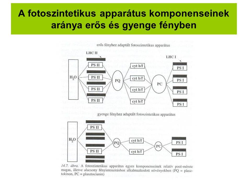 A fotoszintetikus apparátus komponenseinek aránya erős és gyenge fényben