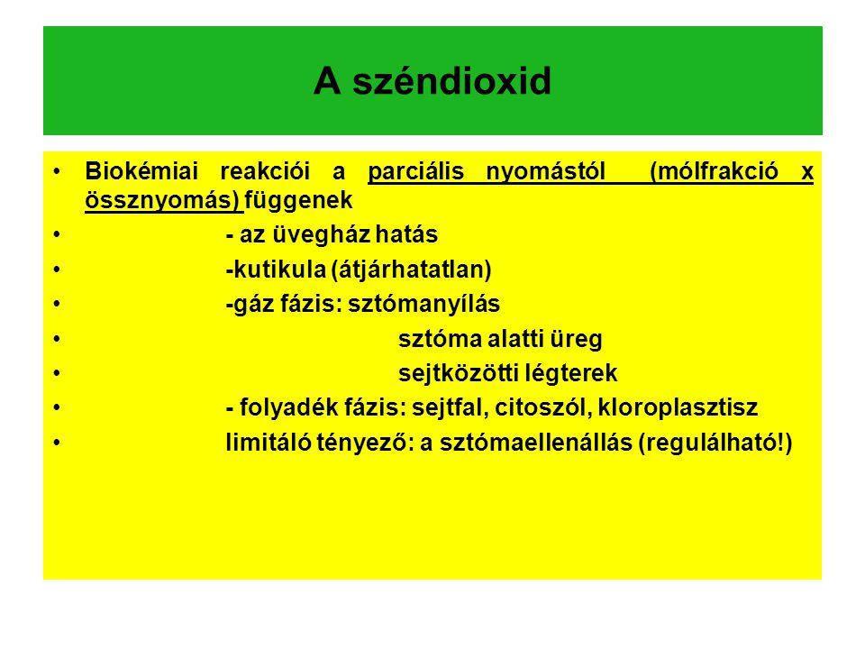 A széndioxid Biokémiai reakciói a parciális nyomástól (mólfrakció x össznyomás) függenek - az üvegház hatás -kutikula (átjárhatatlan) -gáz fázis: sztómanyílás sztóma alatti üreg sejtközötti légterek - folyadék fázis: sejtfal, citoszól, kloroplasztisz limitáló tényező: a sztómaellenállás (regulálható!)