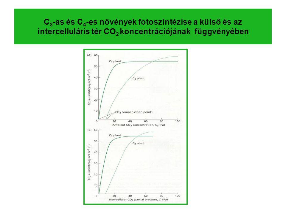 C 3 -as és C 4 -es növények fotoszintézise a külső és az intercelluláris tér CO 2 koncentrációjának függvényében