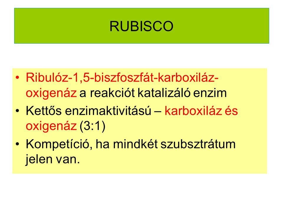 RUBISCO Ribulóz-1,5-biszfoszfát-karboxiláz- oxigenáz a reakciót katalizáló enzim Kettős enzimaktivitású – karboxiláz és oxigenáz (3:1) Kompetíció, ha mindkét szubsztrátum jelen van.