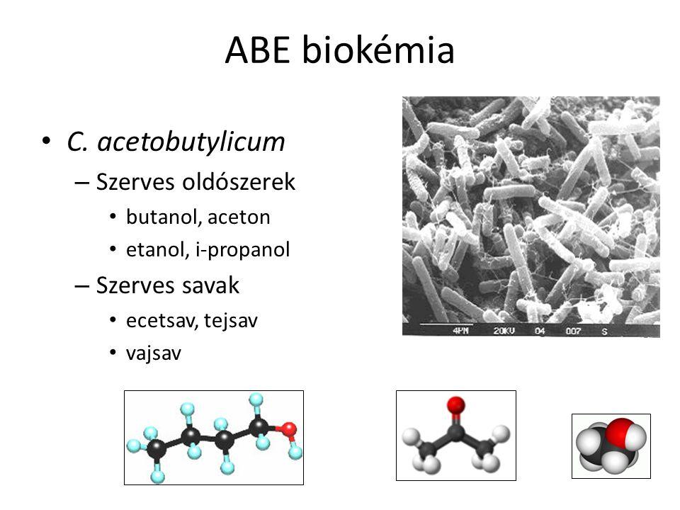 ABE biokémia C. acetobutylicum – Szerves oldószerek butanol, aceton etanol, i-propanol – Szerves savak ecetsav, tejsav vajsav