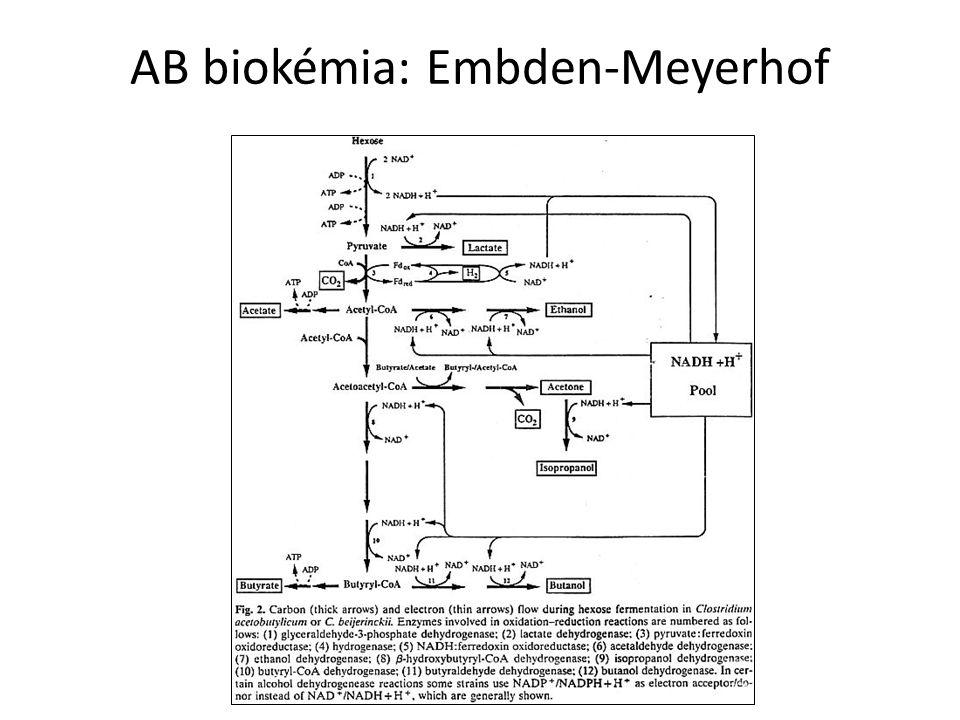 AB biokémia: Embden-Meyerhof