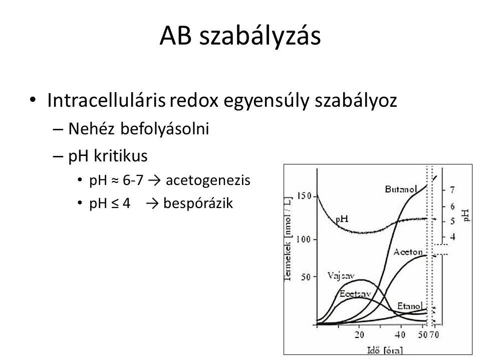 AB szabályzás Intracelluláris redox egyensúly szabályoz – Nehéz befolyásolni – pH kritikus pH ≈ 6-7 → acetogenezis pH ≤ 4 → bespórázik