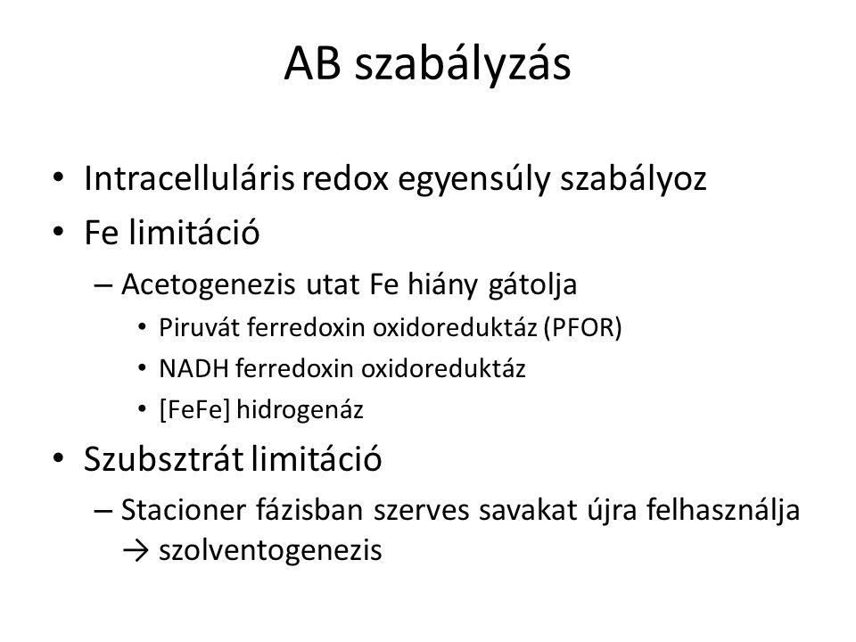 AB szabályzás Intracelluláris redox egyensúly szabályoz Fe limitáció – Acetogenezis utat Fe hiány gátolja Piruvát ferredoxin oxidoreduktáz (PFOR) NADH