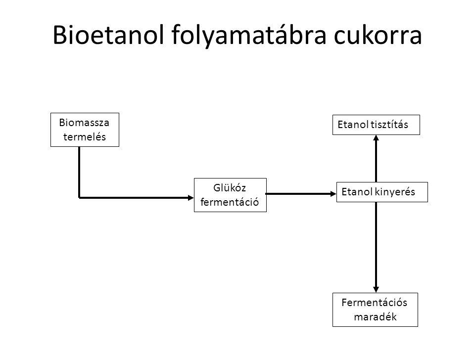 Bioetanol folyamatábra cukorra Biomassza termelés Glükóz fermentáció Etanol kinyerés Etanol tisztítás Fermentációs maradék
