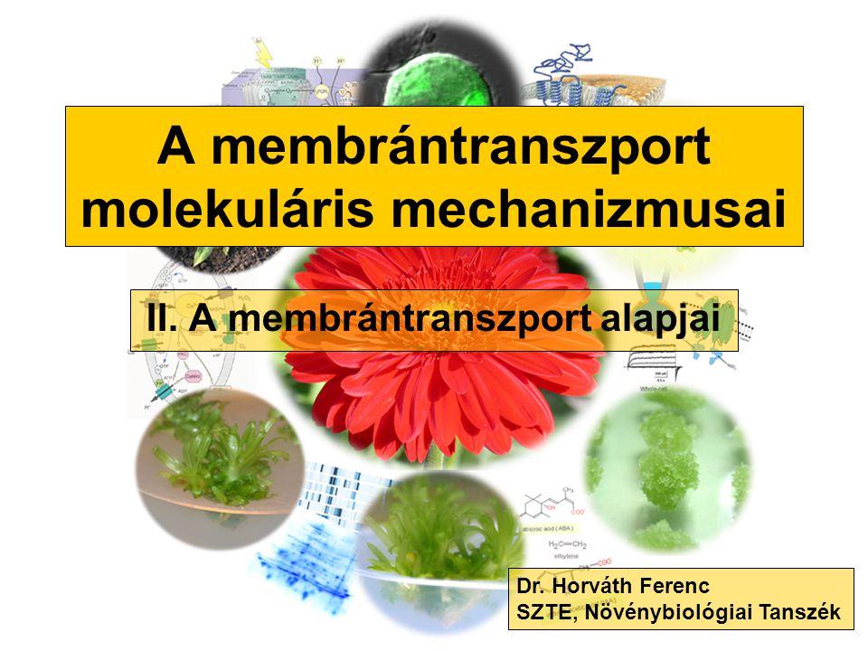 A membrántranszport molekuláris mechanizmusai II. A membrántranszport alapjai Dr. Horváth Ferenc SZTE, Növénybiológiai Tanszék