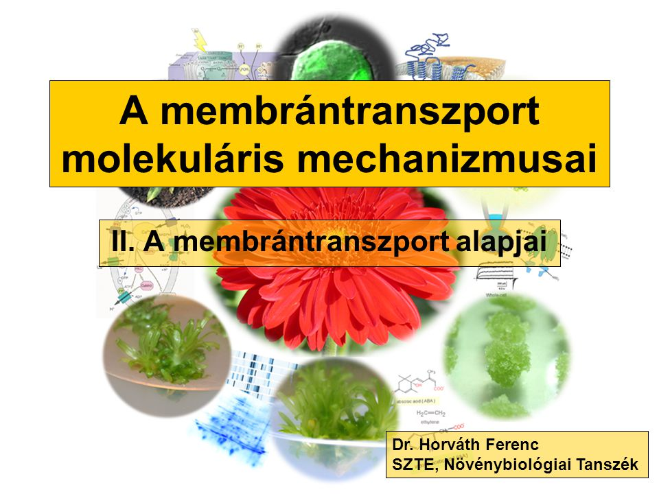A membrántranszport alapjai 1.