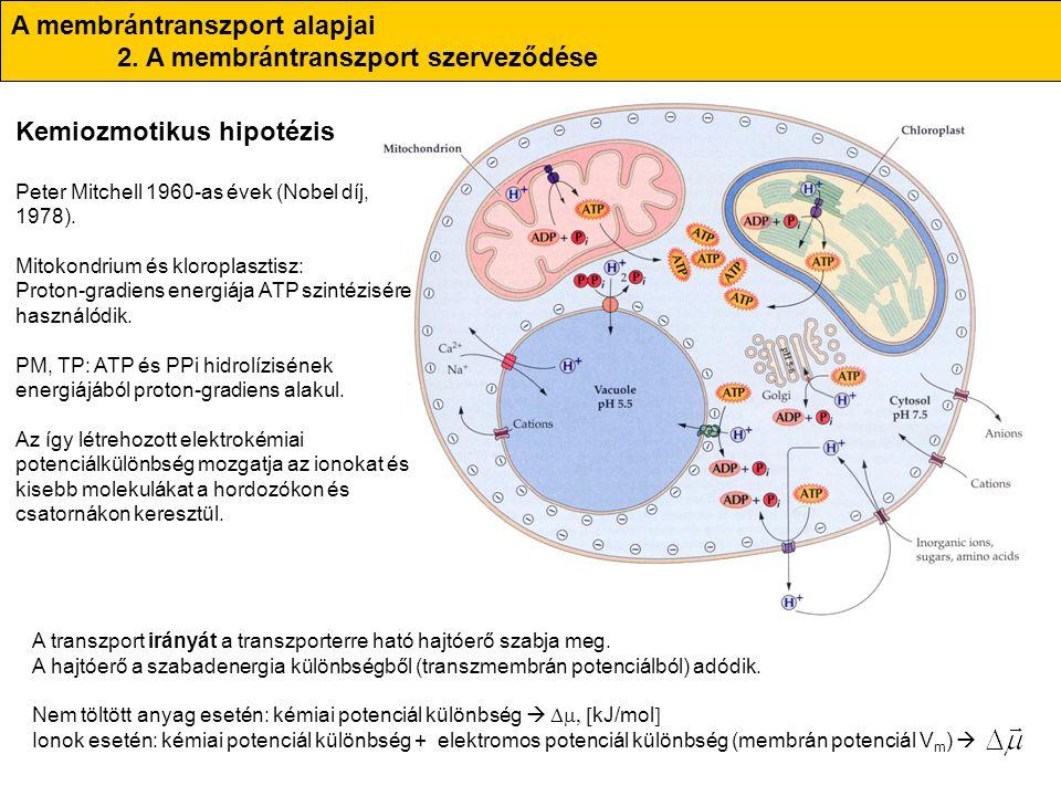 A membrántranszport alapjai 2. A membrántranszport szerveződése Kemiozmotikus hipotézis Peter Mitchell 1960-as évek (Nobel díj, 1978). Mitokondrium és