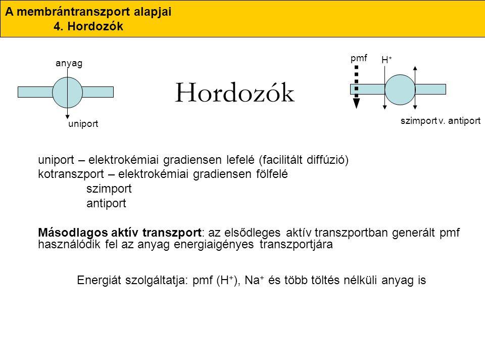 Hordozók uniport – elektrokémiai gradiensen lefelé (facilitált diffúzió) kotranszport – elektrokémiai gradiensen fölfelé szimport antiport Másodlagos