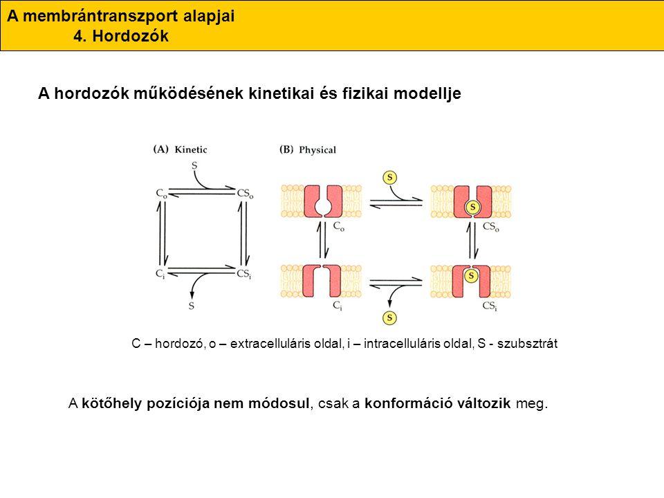 A membrántranszport alapjai 4. Hordozók A hordozók működésének kinetikai és fizikai modellje C – hordozó, o – extracelluláris oldal, i – intracellulár
