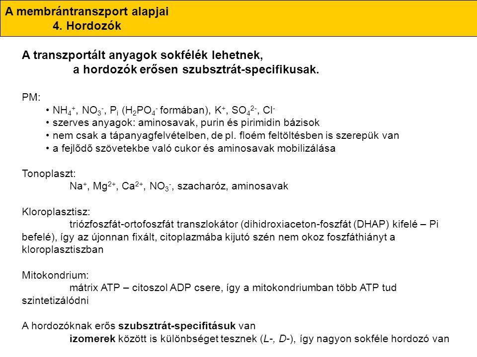 A membrántranszport alapjai 4. Hordozók A transzportált anyagok sokfélék lehetnek, a hordozók erősen szubsztrát-specifikusak. PM: NH 4 +, NO 3 -, P i