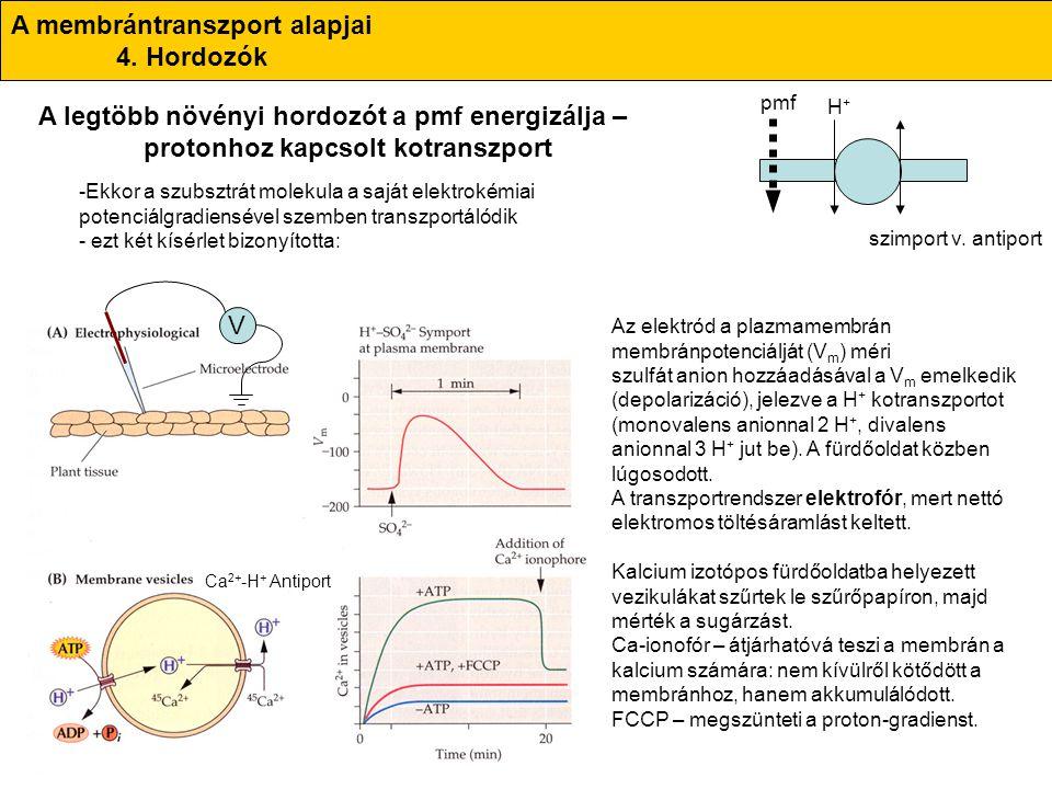 A membrántranszport alapjai 4. Hordozók A legtöbb növényi hordozót a pmf energizálja – protonhoz kapcsolt kotranszport -Ekkor a szubsztrát molekula a