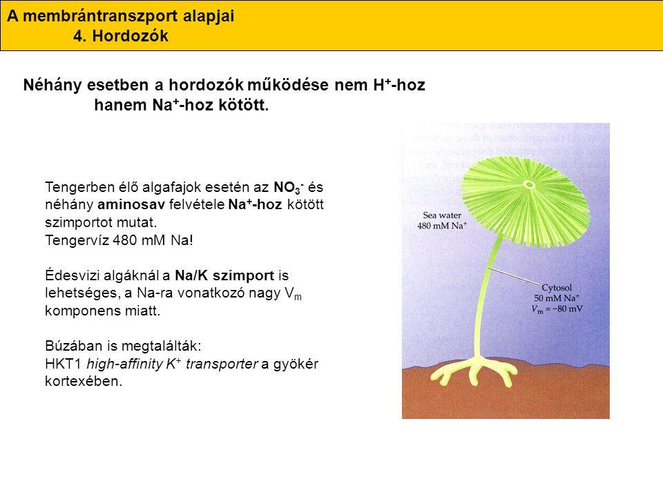 A membrántranszport alapjai 4. Hordozók Néhány esetben a hordozók működése nem H + -hoz hanem Na + -hoz kötött. Tengerben élő algafajok esetén az NO 3