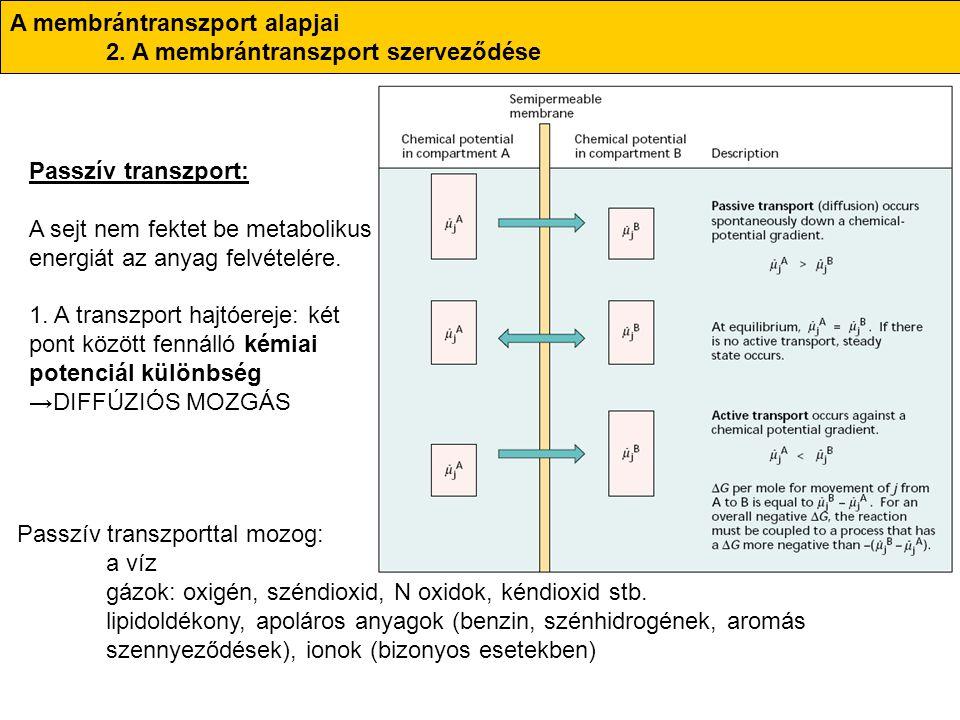 A membrántranszport alapjai 2. A membrántranszport szerveződése Passzív transzport: A sejt nem fektet be metabolikus energiát az anyag felvételére. 1.