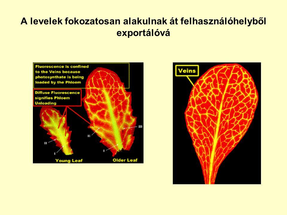 A levelek fokozatosan alakulnak át felhasználóhelyből exportálóvá