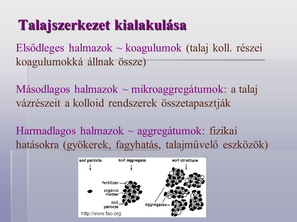 Talajszerkezet kialakulása Elsődleges halmazok ~ koagulumok (talaj koll. részei koagulumokká állnak össze) Másodlagos halmazok ~ mikroaggregátumok: a