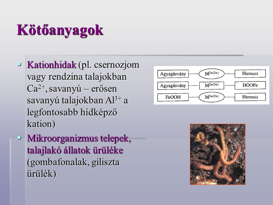 Kötőanyagok  Kationhidak (pl. csernozjom vagy rendzina talajokban Ca 2+, savanyú – erősen savanyú talajokban Al 3+ a legfontosabb hídképző kation) 