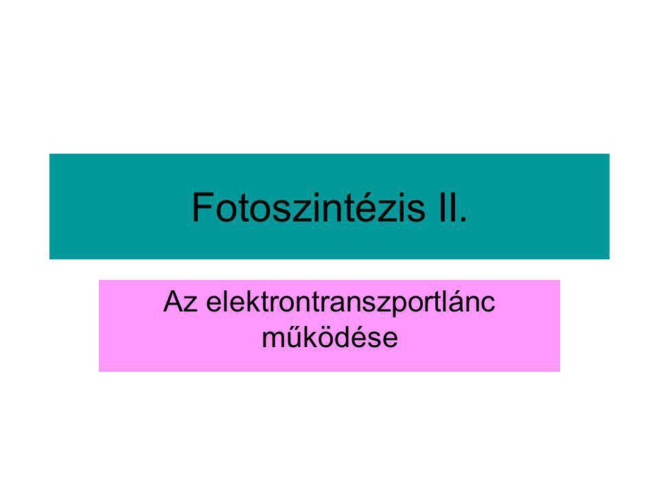 Fotoszintézis II. Az elektrontranszportlánc működése