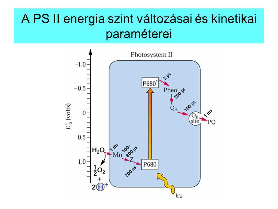A PS II energia szint változásai és kinetikai paraméterei