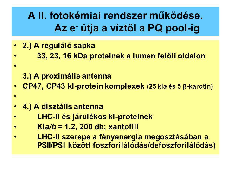 A II. fotokémiai rendszer működése. Az e - útja a víztől a PQ pool-ig 2.) A reguláló sapka 33, 23, 16 kDa proteinek a lumen felőli oldalon 3.) A proxi