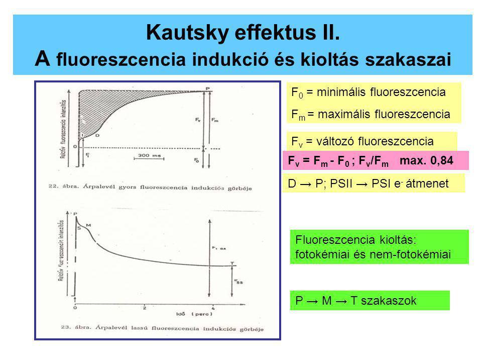 Kautsky effektus II. A fluoreszcencia indukció és kioltás szakaszai F 0 = minimális fluoreszcencia F m = maximális fluoreszcencia F v = változó fluore