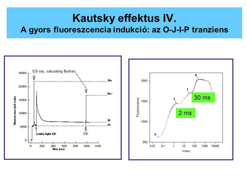 Kautsky effektus IV. A gyors fluoreszcencia indukció: az O-J-I-P tranziens 2 ms 30 ms