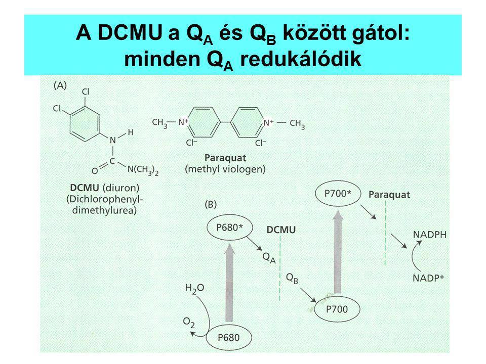 A DCMU a Q A és Q B között gátol: minden Q A redukálódik