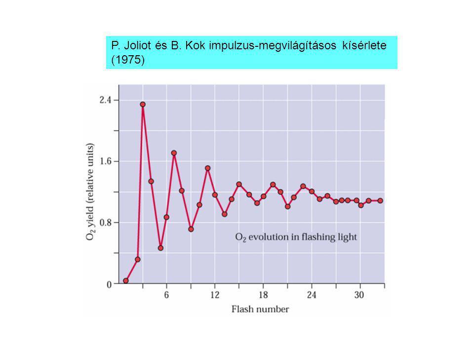 P. Joliot és B. Kok impulzus-megvilágításos kísérlete (1975)