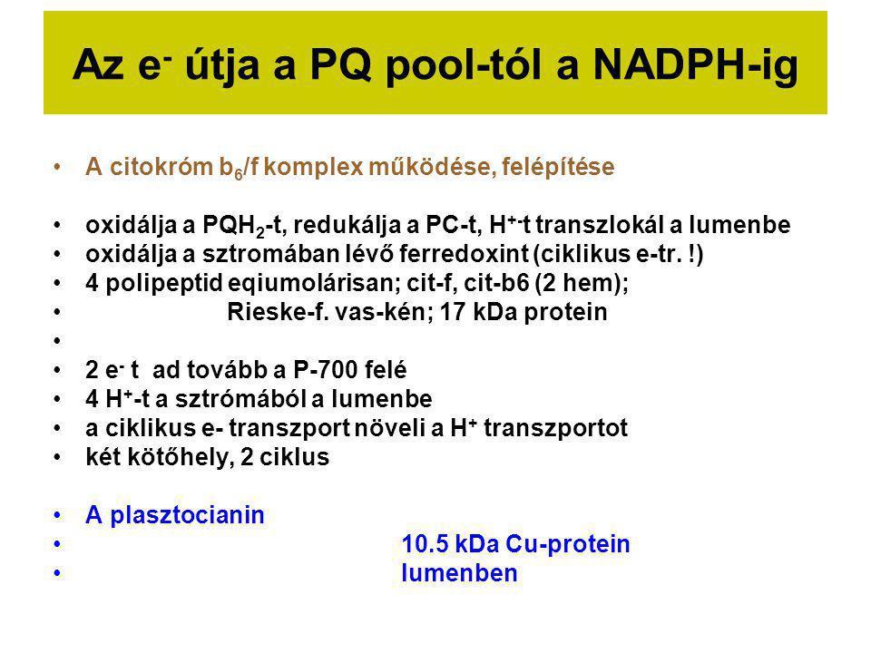 Az e - útja a PQ pool-tól a NADPH-ig A citokróm b 6 /f komplex működése, felépítése oxidálja a PQH 2 -t, redukálja a PC-t, H +- t transzlokál a lumenb
