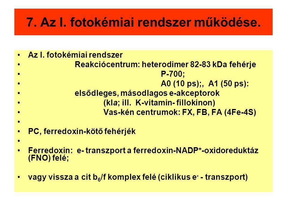 7. Az I. fotokémiai rendszer működése. Az I. fotokémiai rendszer Reakciócentrum: heterodimer 82-83 kDa fehérje P-700; A0 (10 ps);, A1 (50 ps): elsődle