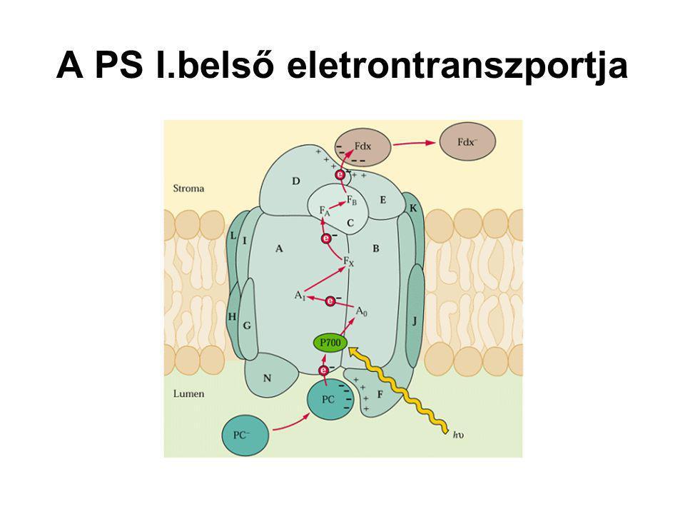 A PS I.belső eletrontranszportja