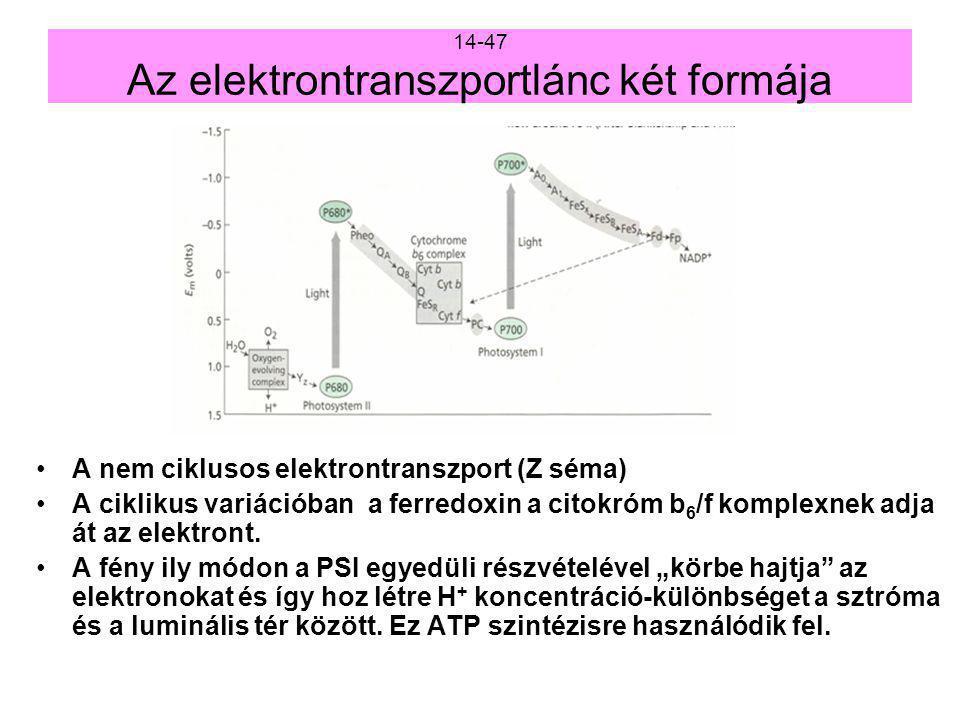 7.Az I. fotokémiai rendszer működése. Az I.