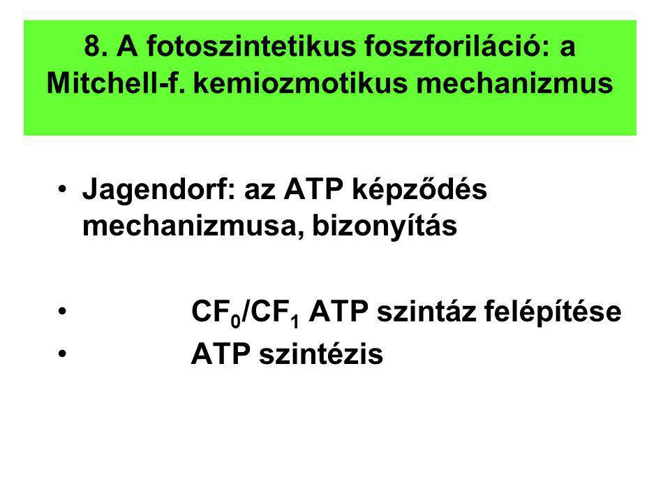 8. A fotoszintetikus foszforiláció: a Mitchell-f. kemiozmotikus mechanizmus Jagendorf: az ATP képződés mechanizmusa, bizonyítás CF 0 /CF 1 ATP szintáz