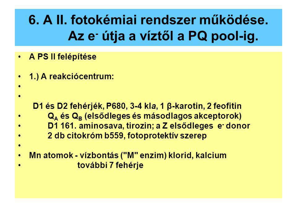6. A II. fotokémiai rendszer működése. Az e - útja a víztől a PQ pool-ig. A PS II felépítése 1.) A reakciócentrum: D1 és D2 fehérjék, P680, 3-4 kla, 1