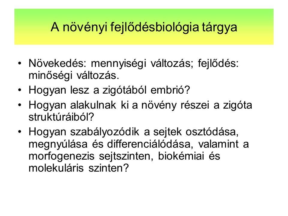 A növényi fejlődésbiológia tárgya Növekedés: mennyiségi változás; fejlődés: minőségi változás. Hogyan lesz a zigótából embrió? Hogyan alakulnak ki a n