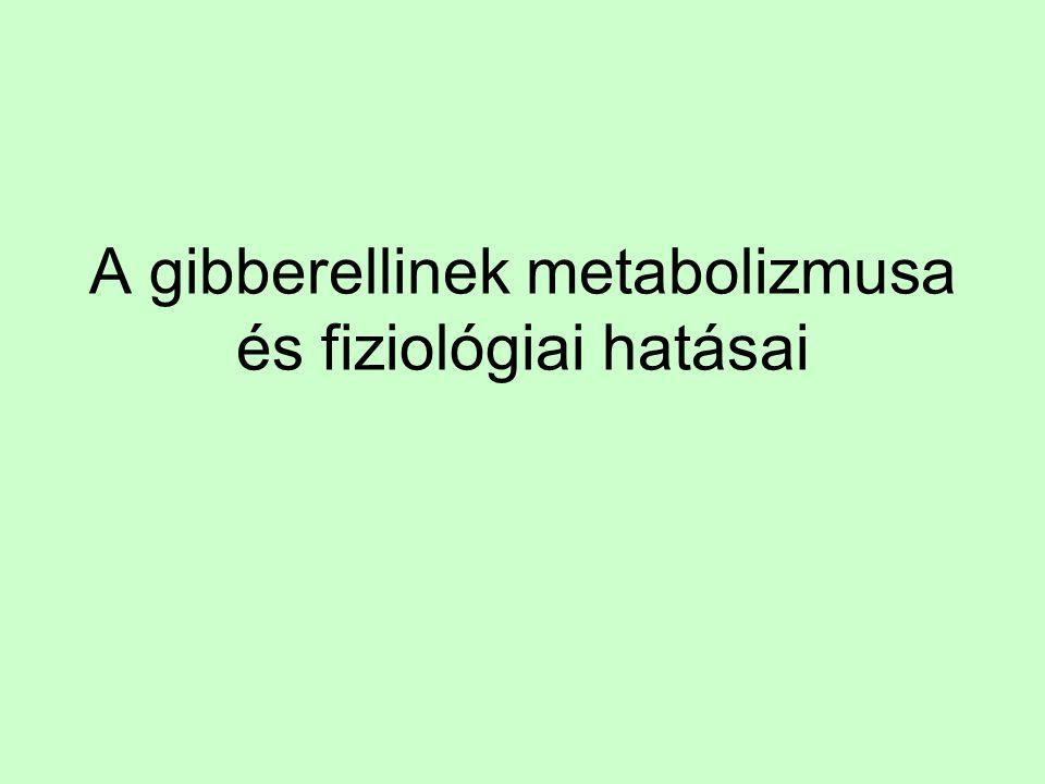 A gibberellinek metabolizmusa és fiziológiai hatásai