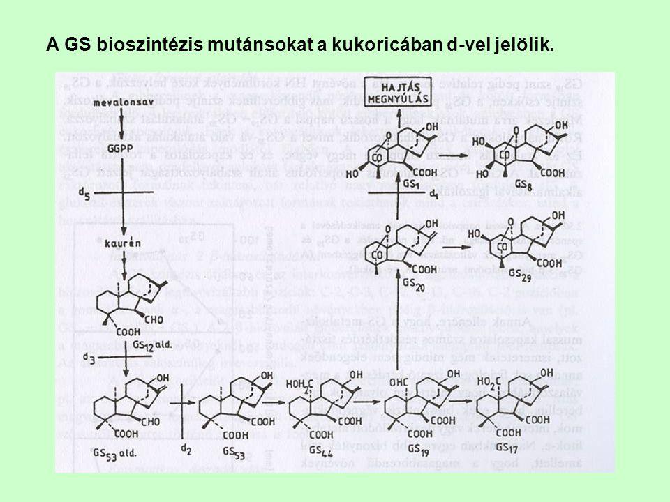 A GS bioszintézis mutánsokat a kukoricában d-vel jelölik.