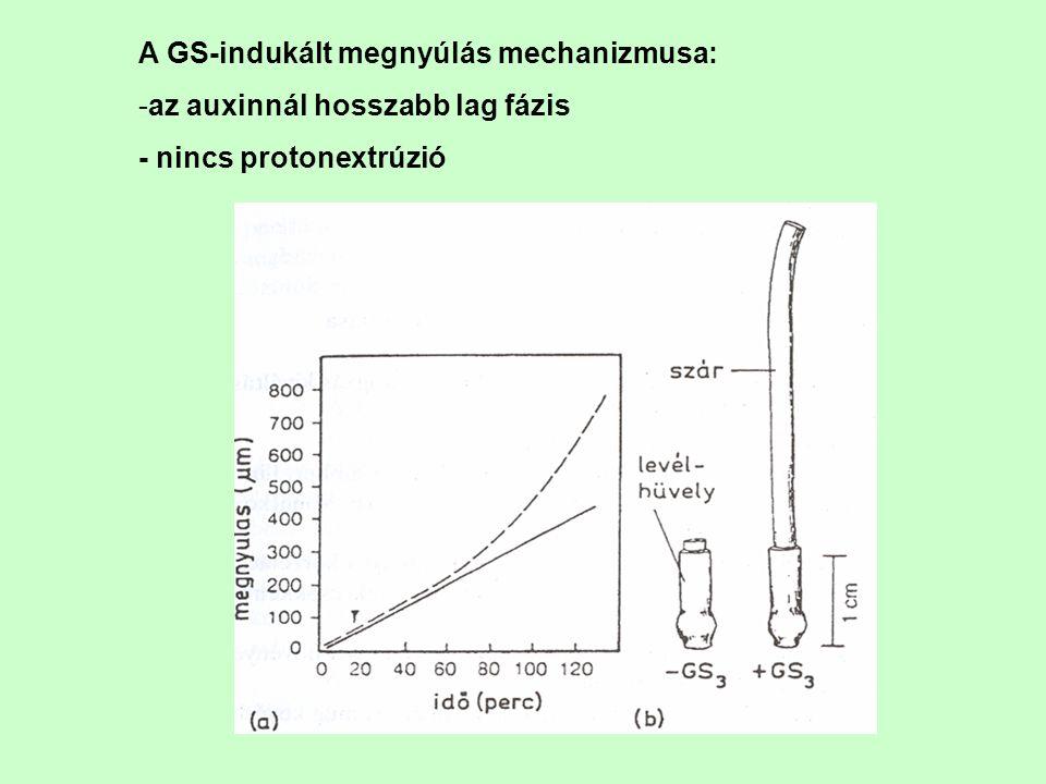 A GS-indukált megnyúlás mechanizmusa: -az auxinnál hosszabb lag fázis - nincs protonextrúzió