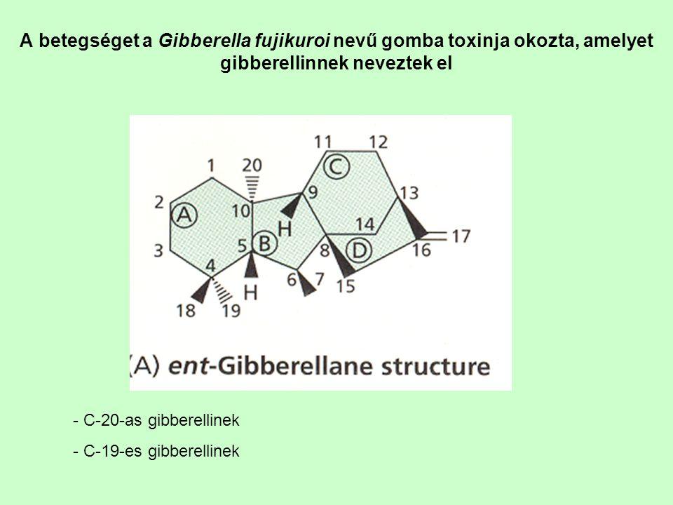 A gibberellinek kimutatása: -Biológiai tesztekkel (saláta hipokotil teszt, törpe növény megnyúlási teszt, árpa endospermium teszt) - HPLC-MS, GC-MS - jó immunológiai módszer nincs