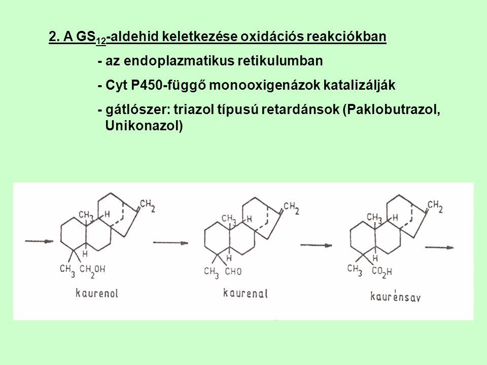 2. A GS 12 -aldehid keletkezése oxidációs reakciókban - az endoplazmatikus retikulumban - Cyt P450-függő monooxigenázok katalizálják - gátlószer: tria