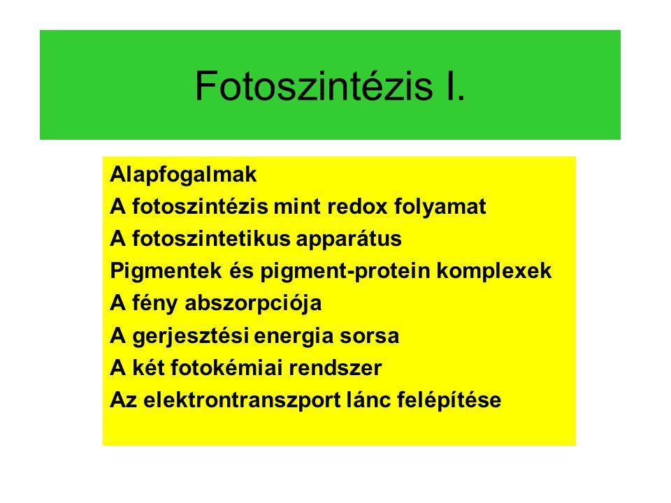 Fotoszintézis I. Alapfogalmak A fotoszintézis mint redox folyamat A fotoszintetikus apparátus Pigmentek és pigment-protein komplexek A fény abszorpció