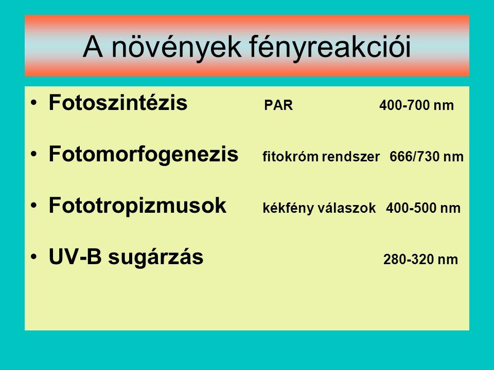 A növények fényreakciói Fotoszintézis PAR 400-700 nm Fotomorfogenezis fitokróm rendszer 666/730 nm Fototropizmusok kékfény válaszok 400-500 nm UV-B su